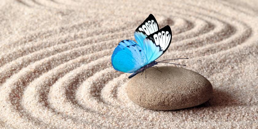 Blue Butterfly on a rock
