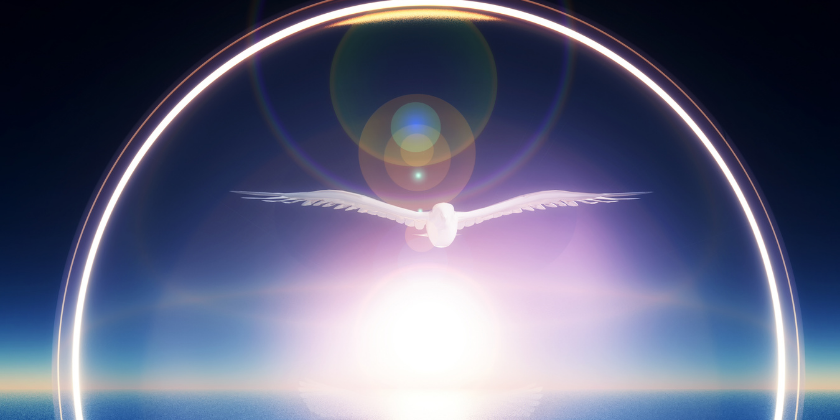 Dove Flying in the Sunset