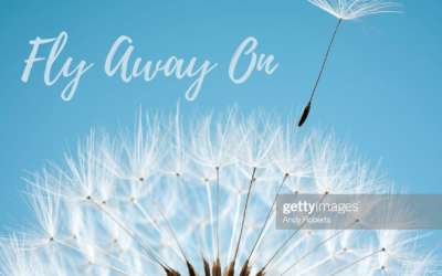 Fly Away On